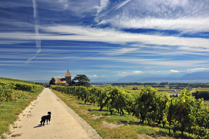 pet-friendly wineries