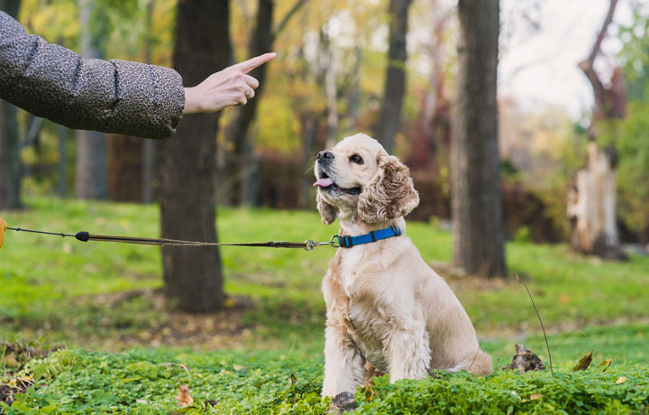 Real-Life Dog Training: Duration, Distraction, and Distance