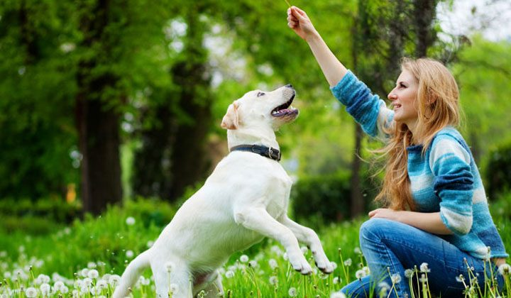 Behavioral  Improvement Of Your Dog
