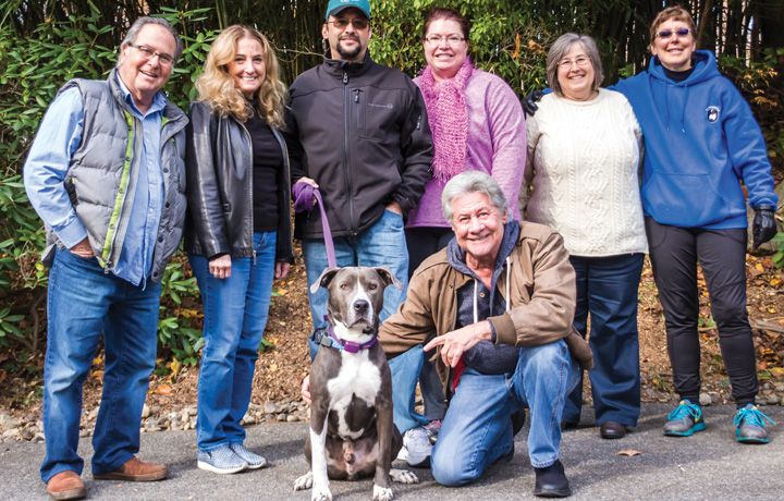 Vets Foster Pets