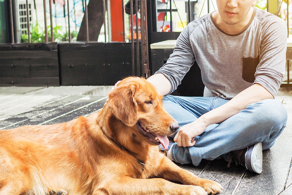 therapy dogs for special needs